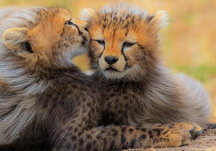fraternal-kiss