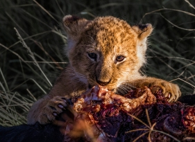 im-hungry