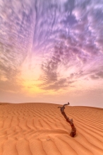 alone-in-the-desert2
