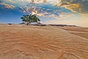 tree-in-the-desert